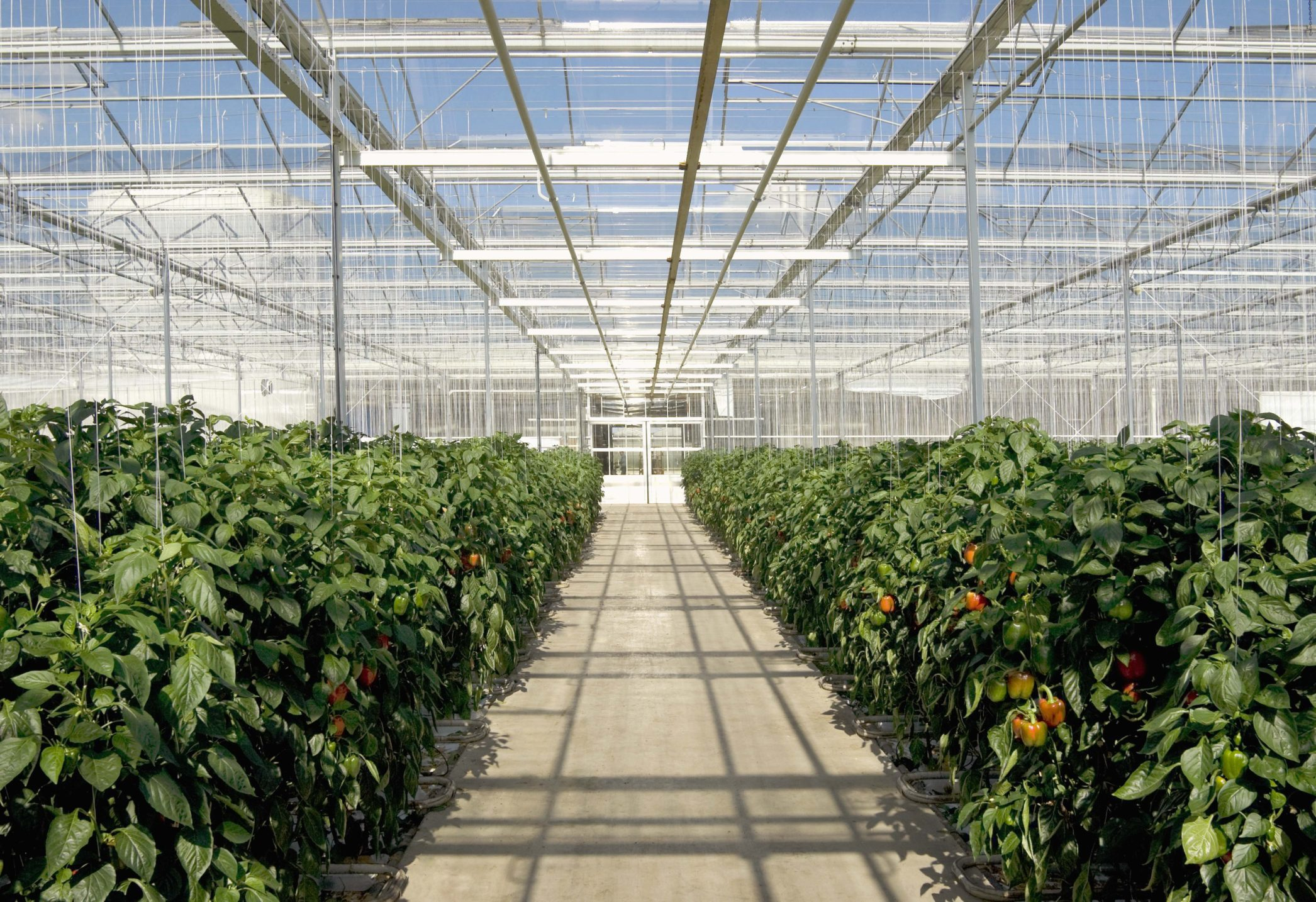 Projects on greenhouse business and service sphere were accepted to support by ARDC